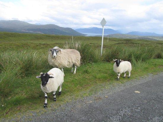 Skye Shepherd Huts: Our neighbors.