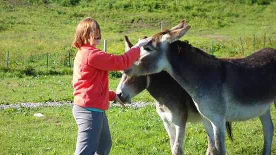 Skye Shepherd Huts: Feeding the donkeys.