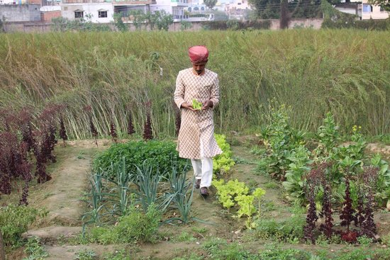 Nadesar Palace Varanasi: Our carriage driver (his beloved horse Munna) giving us a tour of the vegetable garden