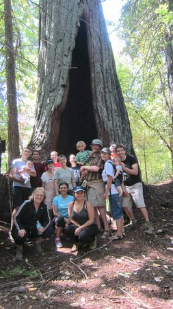 Mountain Home Ranch: the Grandmother redwood tree on hiking trail