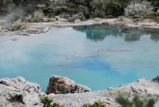 Te Puia : Hot Pool