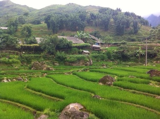 Ta Phin Village: Sapa rice terraces