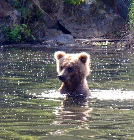 Alaska West Air: bear