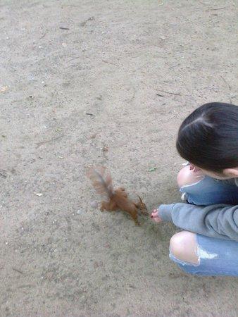 Łazienki-Park (Park der Bäder): Вот такие здесь непугливые грызуны