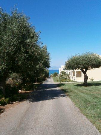 Mareblue Beach Resort: Bogata roślinność na terenie hotelu