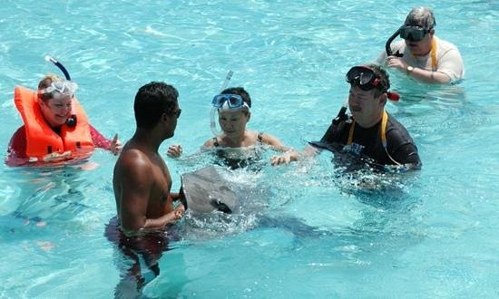 Bora Bora Lagoonarium : Small group in private experience.