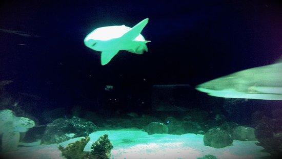 Vancouver Aquarium: 6
