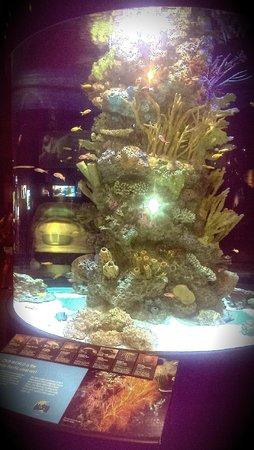 Vancouver Aquarium: 1