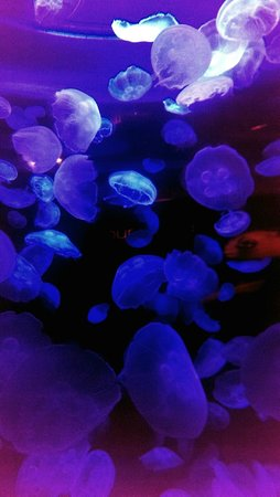 Vancouver Aquarium: 3
