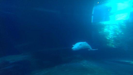 Vancouver Aquarium: 4