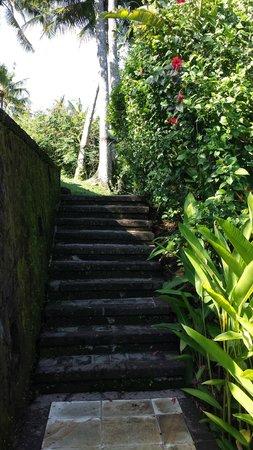 Amandari: Stairway to river Ayun