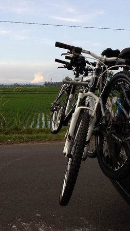 Amandari: Cycling at sunset in the rice fields