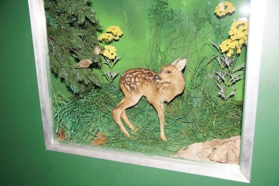 Schloss Augustusburg: Ausstellung Heimische Tierarten