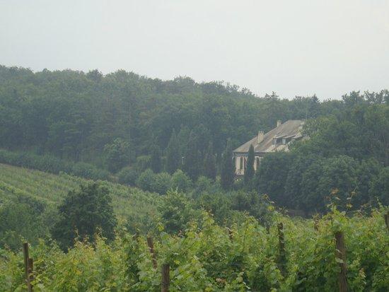 Oplenac: vineyards and king villa