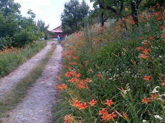 Banjara Camps - Thanedar: On the way to St Mary's Church, Kotgadh