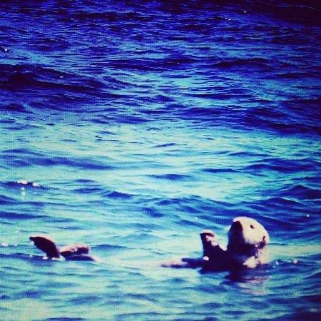 Alaska Creekside Cabins : Recreation -- sea otters spotted on leisure cruise