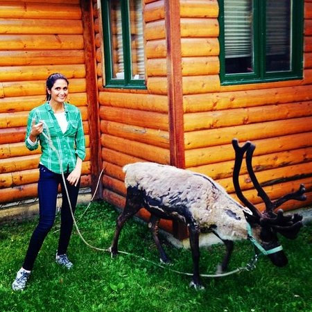 Alaska Creekside Cabins: Reindeer visitor at the cabin