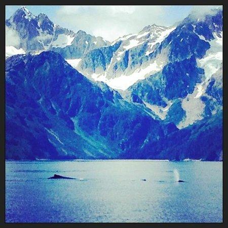 Alaska Creekside Cabins: Recreation -- whale watching on leisure cruise