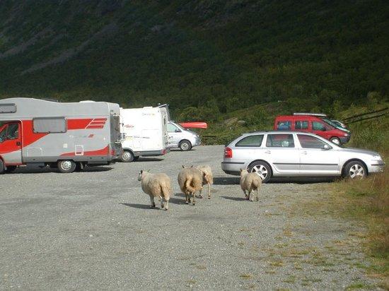 Jotunheimen National Park: Parkplatz mit wilder Natur