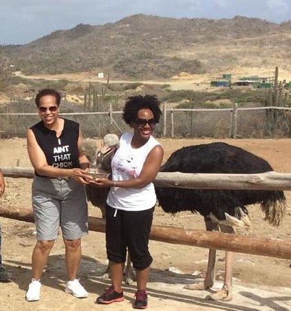 Aruba Ostrich Farm: Ostrich Farm