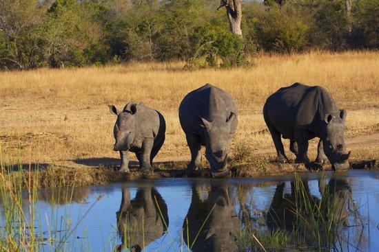 Tydon Safari Camp: Rhino family drinking