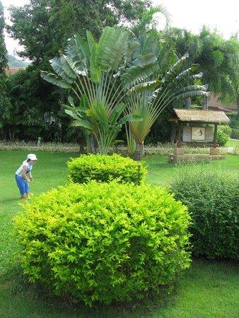 Centara Karon Resort Phuket : зелёная ухоженная территория