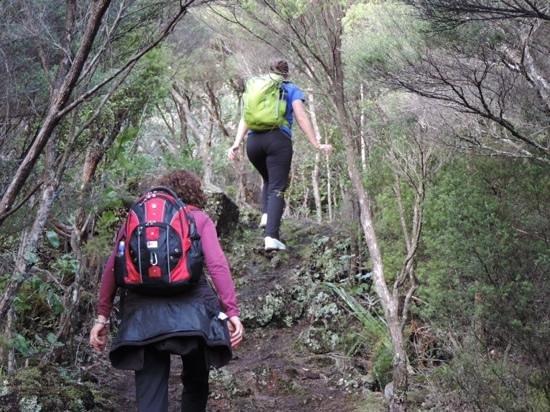 Rangitoto Island: heading towards the lava caves