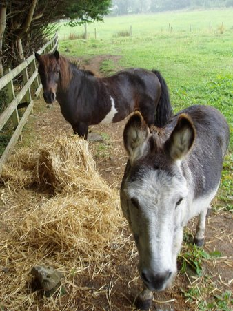 Gregans Castle Hotel: Donkeys
