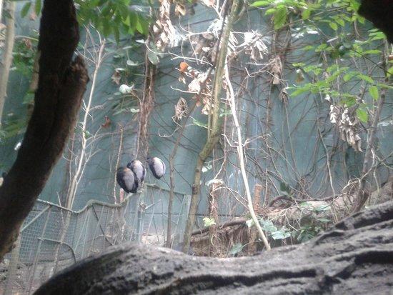 "CosmoCaixa Barcelona: птички в ""лесу"""
