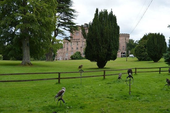 Dalhousie Castle: Falconry