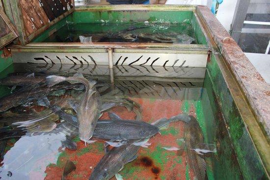 Fish Market : лубителям рыбалки...