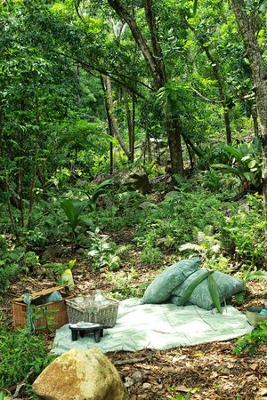 North Island Seychelles: North Island Picnic in the forest