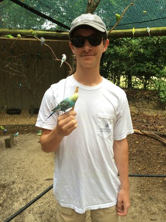 The Gulf Breeze ZOO : Feeding the budgies