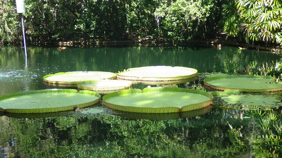 Bok Tower Gardens : LILY PADS