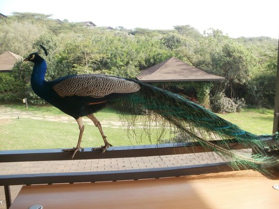 Great Rift Valley Lodge & Golf Resort: A place one with nature