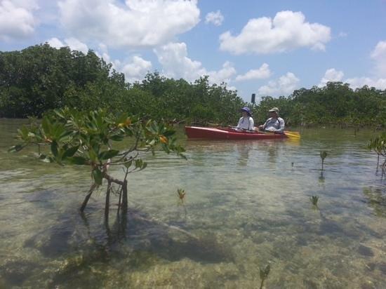 National Key Deer Refuge: Kayaking in the refuge