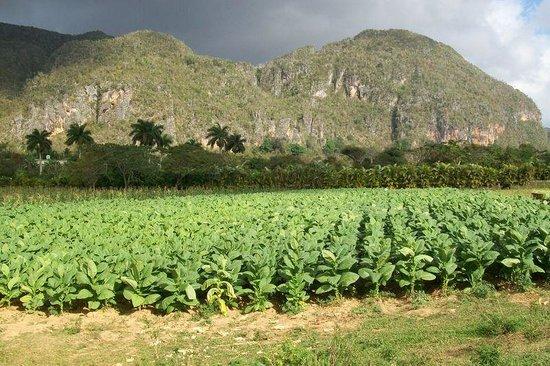Discover Vinales