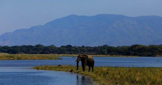Chiawa Camp : Lower Zambezi