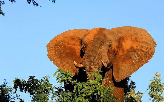 Chiawa Camp : Angry elephant