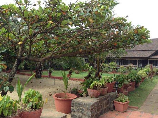 Palm Tree Heritage: gardens