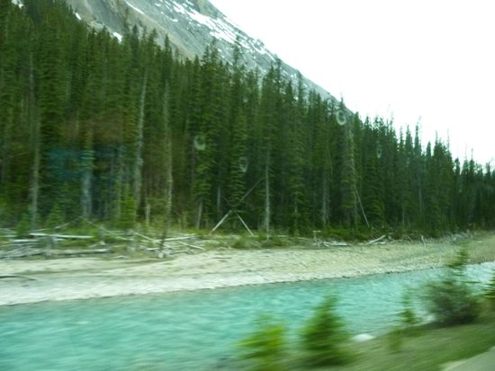 The Rocky Mountaineer Train: forests, see reflection in pic