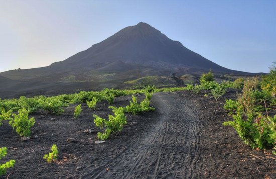 Pico Do Fogo: Виноградники на вулканическом пепле