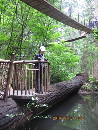 Parque y Puente colgante de Capilano: 自然を楽しもう