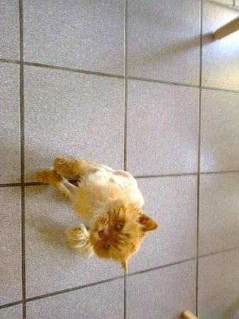 Hotel Le Gerfaut : le chat de Damien et Servane