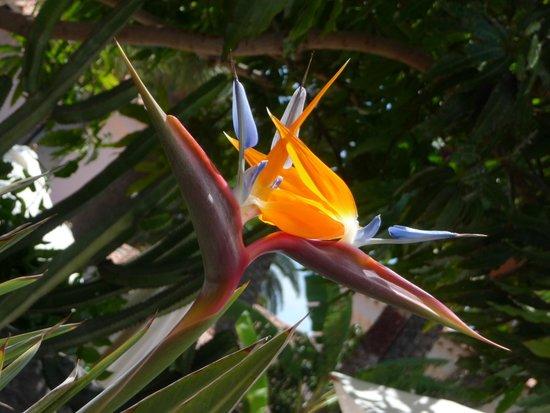 Seaside Grand Hotel Residencia: Herrliche Blumen und Kakteen blühten in der Gartenanlage.