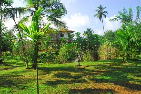 Villa Mangrove: garden