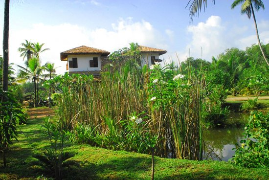 Villa Mangrove: view