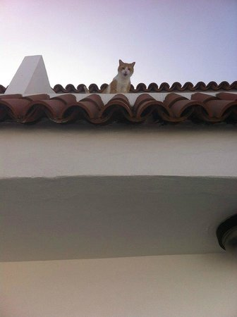 Las Floritas Apartments : local cat