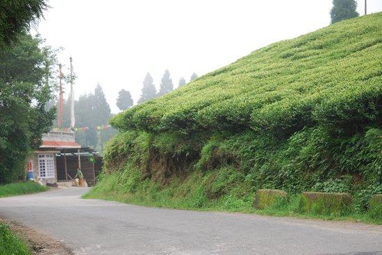 Summit Swiss Heritage Hotel & Spa: tea Garden