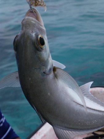 X'tan Ha Resort: Great fishing charter!